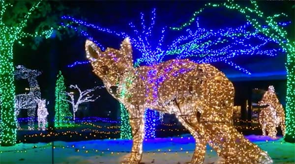 'Wild Lights' Display at the Detroit Zoo Is an Awesome Place to Pop the Question